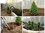 Озеленение частных объектов