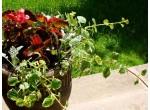 Сады для людей