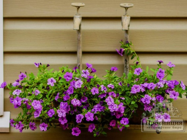 Садик на стене